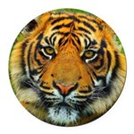 The Last Tiger? Round Car Magnet