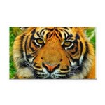 The Last Tiger? Rectangle Car Magnet
