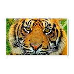 The Last Tiger? Car Magnet 20 x 12