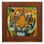 The Last Tiger? Framed Tile