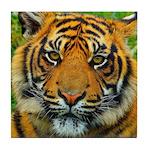 The Last Tiger? Tile Coaster