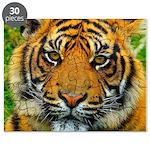 The Last Tiger? Puzzle