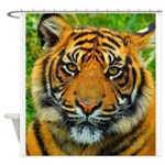 The Last Tiger? Shower Curtain