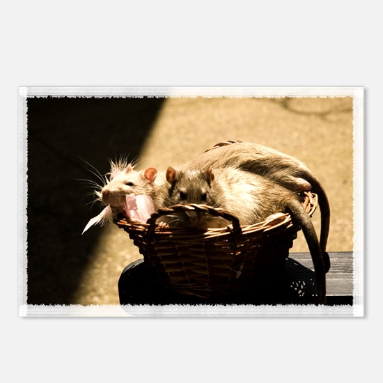 Sun and Shadow Rats Postcards (Package of 8)