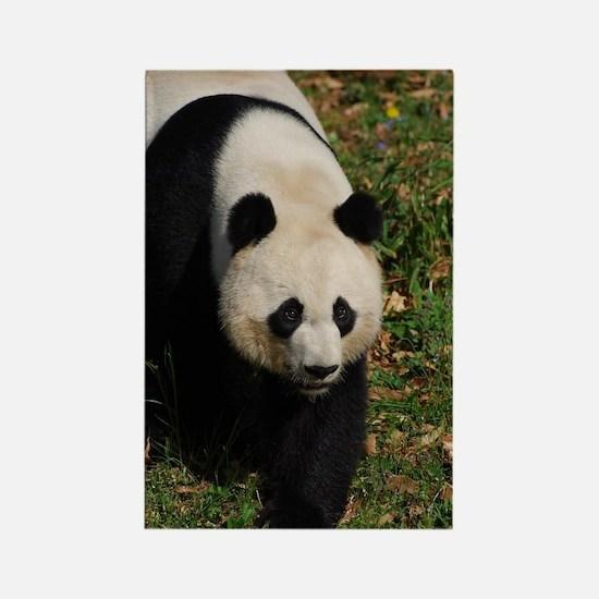 Giant Panda Bear Strutting His St Rectangle Magnet