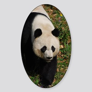 Giant Panda Bear Strutting His Stuf Sticker (Oval)
