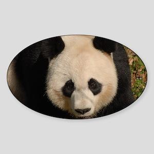 Cute Black and White Panda Face Sticker (Oval)