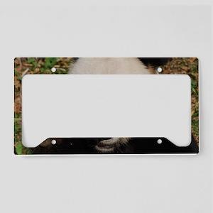 Panda Snacking License Plate Holder