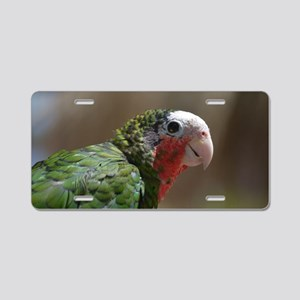 Conure BIrd with a Red Thro Aluminum License Plate