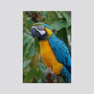 Blue an Gold Macaw on a Branch Rectangle Magnet
