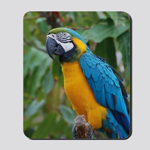 Blue an Gold Macaw on a Branch Mousepad