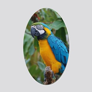 Blue an Gold Macaw on a Bran 20x12 Oval Wall Decal