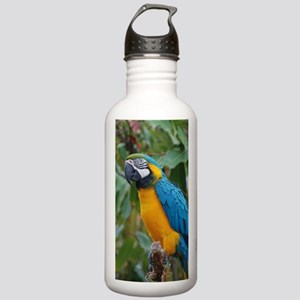 Blue an Gold Macaw on  Stainless Water Bottle 1.0L