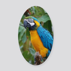 Blue an Gold Macaw on a Branch Oval Car Magnet