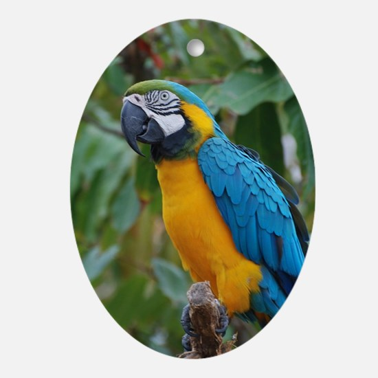 Blue an Gold Macaw on a Branch Oval Ornament