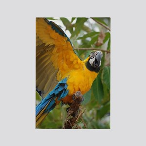 Macaw Parrot with Wings Extended Rectangle Magnet