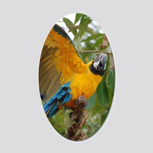 Macaw Parrot with Wings Exte 20x12 Oval Wall Decal