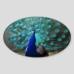 Peacock Plummage Sticker (Oval)