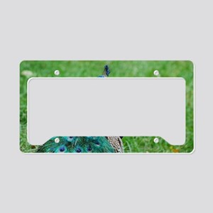 Gorgeous Peacock License Plate Holder