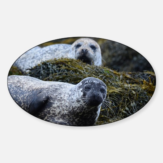 Lounging Seal Sticker (Oval)