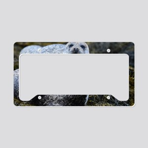 Lounging Seal License Plate Holder