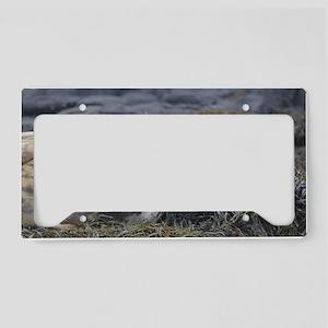 Cute Grey Seal License Plate Holder