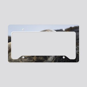Profile of a Grey Seal License Plate Holder
