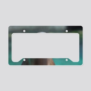 Roaring Sea Lion License Plate Holder
