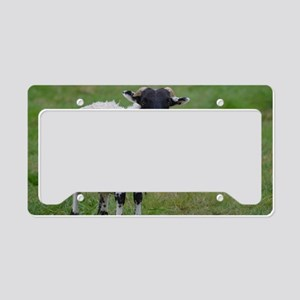 Adorable Black Face Sheep License Plate Holder