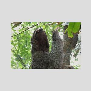Tree Climbing Sloth Rectangle Magnet