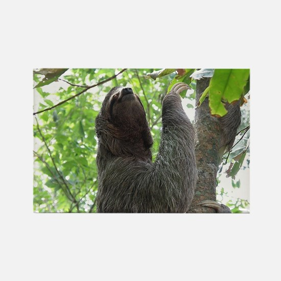 Tree Climbing Sloth Rectangle Magnet
