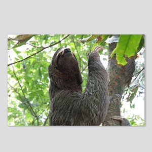 Tree Climbing Sloth Postcards (Package of 8)