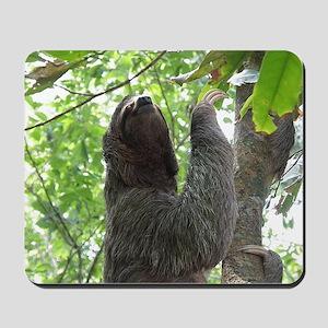 Tree Climbing Sloth Mousepad