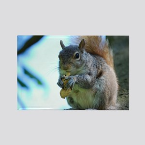 Adorable Squirrel Rectangle Magnet