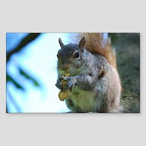 Adorable Squirrel Sticker (Rectangle)