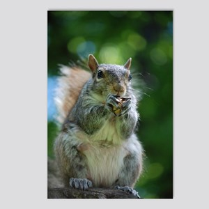 Friendly Squirrel Postcards (Package of 8)