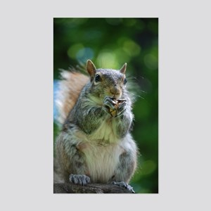 Friendly Squirrel Sticker (Rectangle)