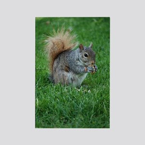 Squirrel in a Field Rectangle Magnet