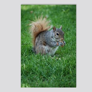 Squirrel in a Field Postcards (Package of 8)