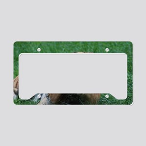 Tiger Washing His Face License Plate Holder