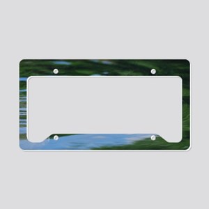 Sea Turtle Poking Head Up License Plate Holder