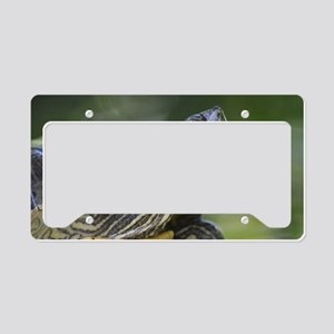 Painted Turtle on a Rock License Plate Holder