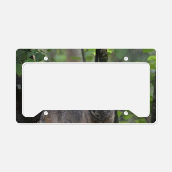 Wild Timber Wolf License Plate Holder