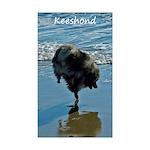 Keeshond Ballet Sticker (Rectangle 50 pk)