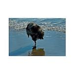 Keeshond Ballet Rectangle Magnet (10 pack)