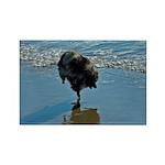 Keeshond Ballet Rectangle Magnet (100 pack)
