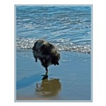 Keeshond Ballet Small Poster
