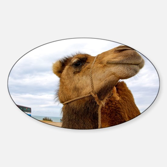 Moroccan Camel Sticker (Oval)