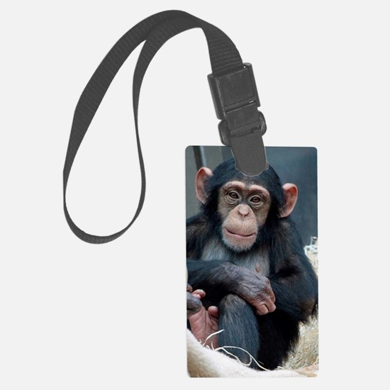 Chimpanzee 007 Luggage Tag