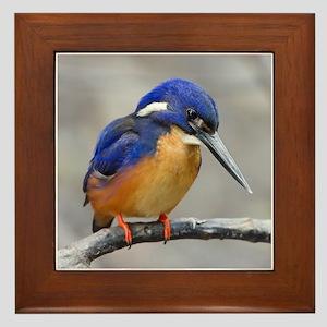 Azure Kingfisher Framed Tile